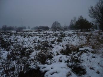 de heuveltjes van erica in de sneeuw