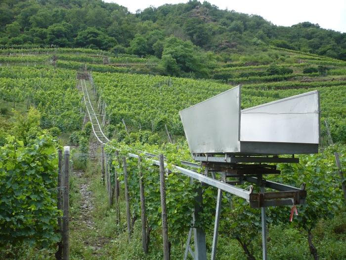 bij de wijnoogst worden de druiven in deze bakken verzameld, die op een rail-leiding gemonteerd zijn