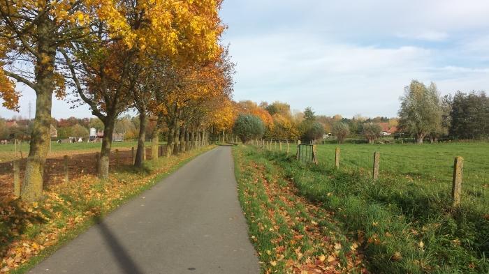 herfstgetinte bomen en groene exemplaren broederlijk bij elkaar