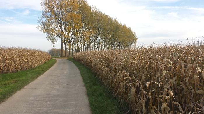 beschut door de maïs