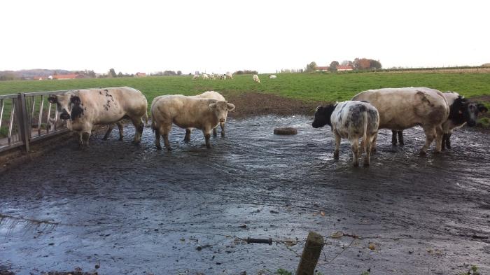 deze dames houden van modder aan de voetjes