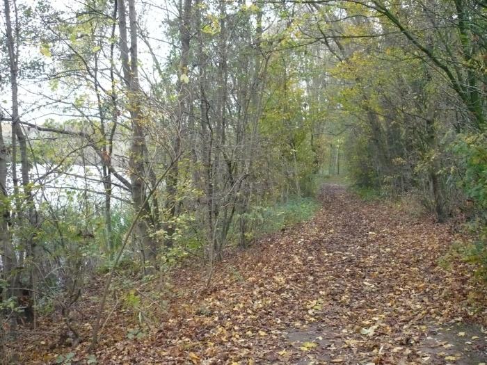 het pad van herfstblaadjes maakt het heerlijk wandelen