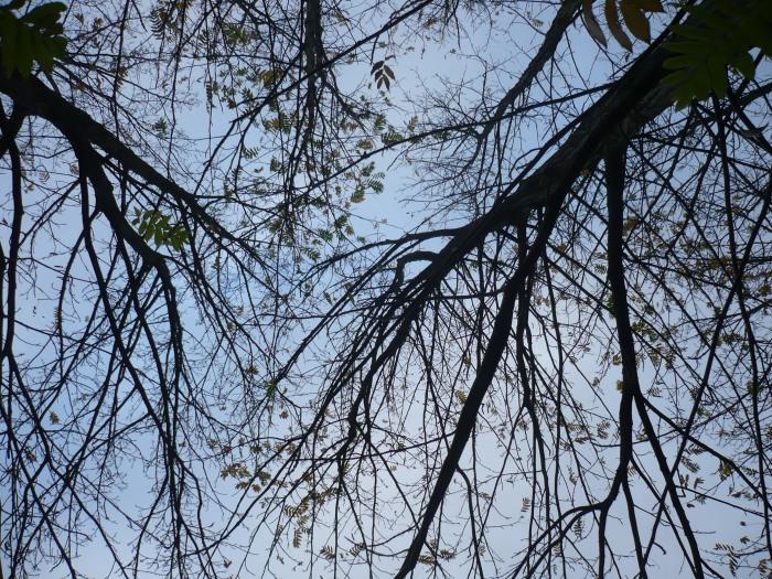 veel bomen hebben hun bladeren al verloren